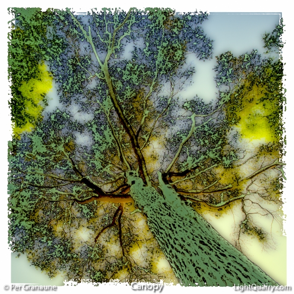 Canopy by Per Granaune